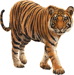 Tiger-transparent - WildTrails Recent Sightings | The One ...