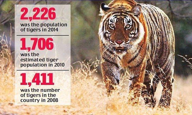 TigerReserveStats2