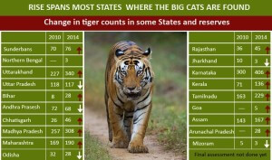 TigerExtinction-Numbers2015-India
