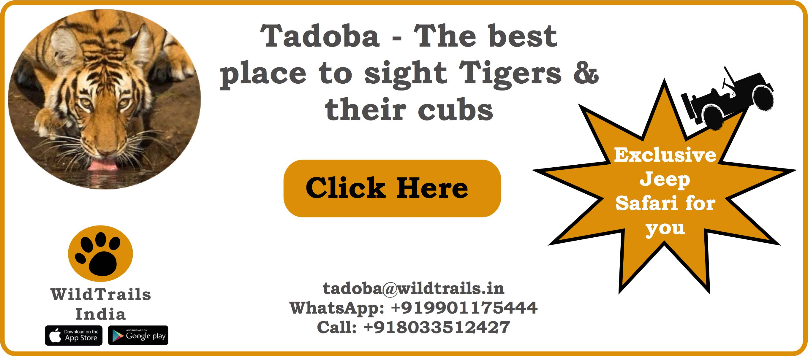 best economical tadoba package