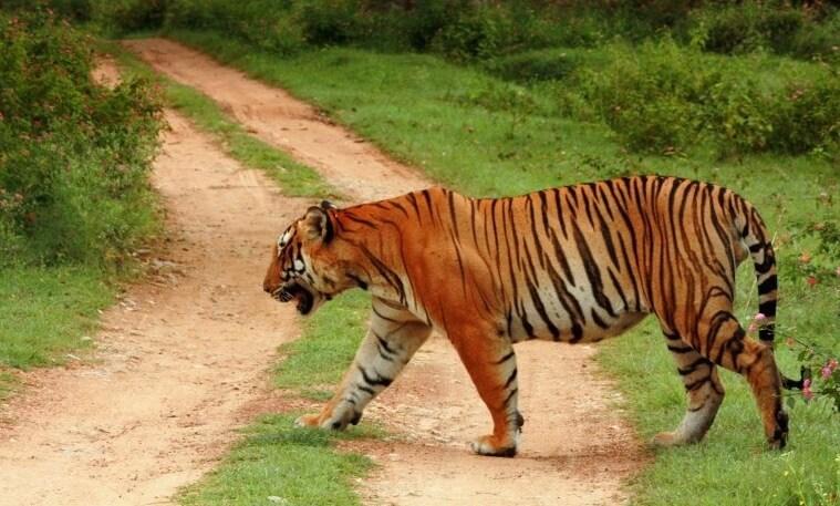 Top 5 Wildlife Weekend getaways from Bangalore!