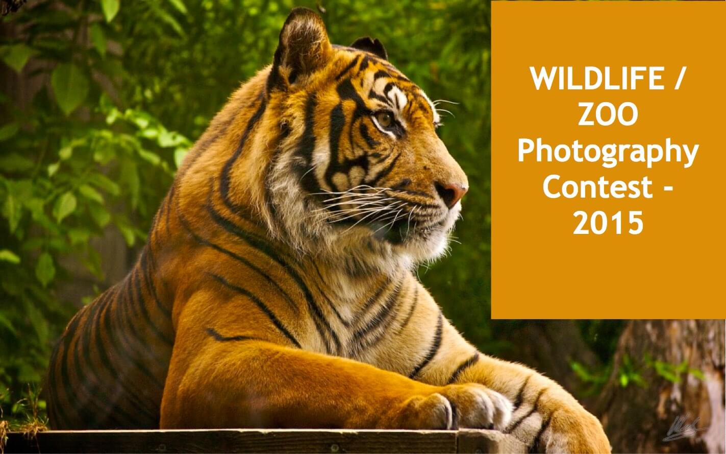 "Wildlife Zoo Photography Contest by Mysore Zoo - WildTrails of India - ""Aggregator App for Your Wildlife Trip"" (We are an Aggregator App, bringing all of Indian wildlife & Nature resorts into one place to help YOU find your ideal destination/resort based on your personal preferences!! Will aggregate Wildlife/Nature Resorts, National parks, (bird & animal) Sanctuaries, Tiger & Elephant reserves, Organized photographic oriented wildlife tours, Camera, Lens & related equipment Rentals, Cab/Car Rentals, Photography Workshops, info about Indian Animals & birds, Tourist Guides and lot more. Currently we are covering Bandipur, Nagarhole (Kabini & Coorg), Coorg & Bird Sanctuaries close to Bangalore.) PS1: The app will be released soon and will be a paid app. Please register for our Beta program to qualify for a free app. PS2: Please be a responsible wildlife tourist; No littering, No sounds, No feeding, no getting down from the safari jeep, No calls, Phones to Silent mode or Airplane mode or Switch off. Remember we are visiting their home and when we are there, let's follow their rules."