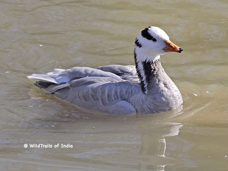 Bonal Bird Sanctuary, [The WildTrails of India app is the best way to get all the details about Indian wildlife sanctuaries (best travel times, safari details, animal sightings, forest accommodations pairing, wildlife related activities, prices, etc). Learn more about WildTrails of India here.]