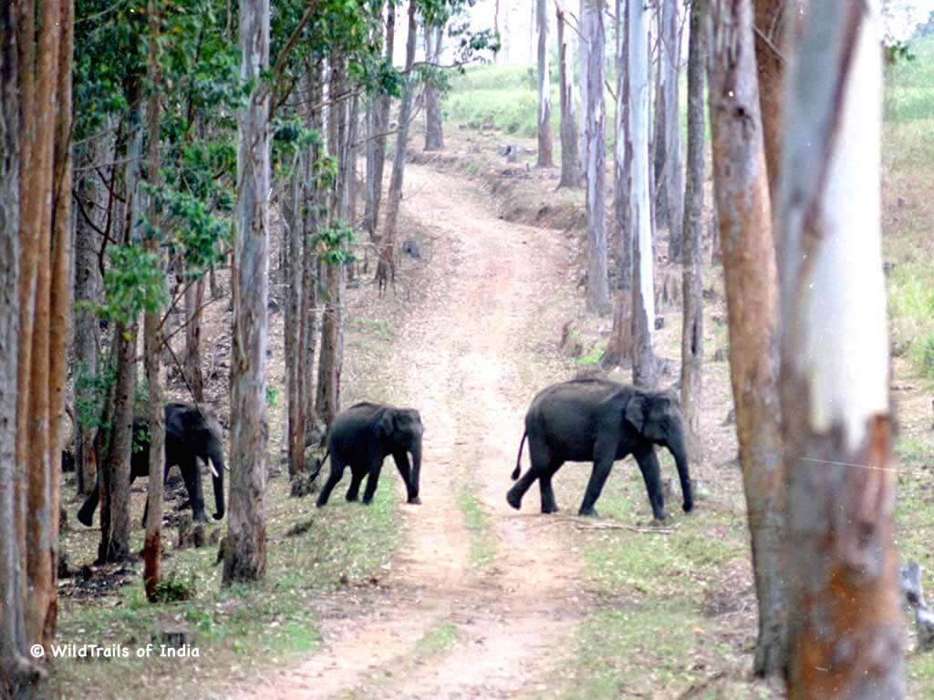 complete list of all wildlife sanctuaries of kerala india