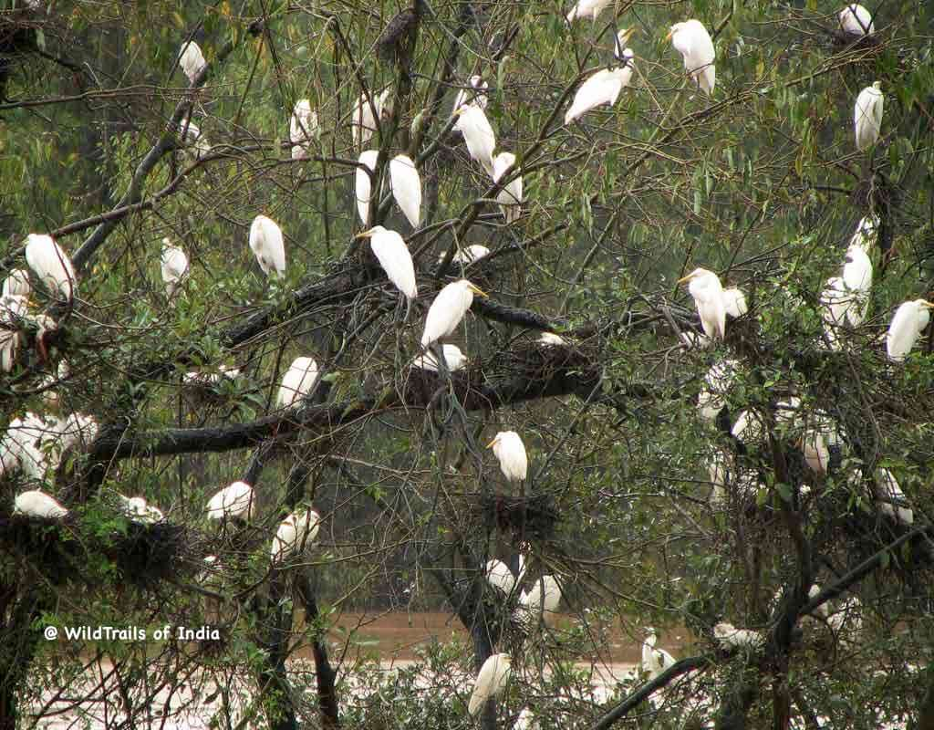 mandagadde bird sanctuary, [The WildTrails of India app is the best way to get all the details about Indian wildlife sanctuaries (best travel times, safari details, animal sightings, forest accommodations pairing, wildlife related activities, prices, etc). Learn more about WildTrails of India here.]