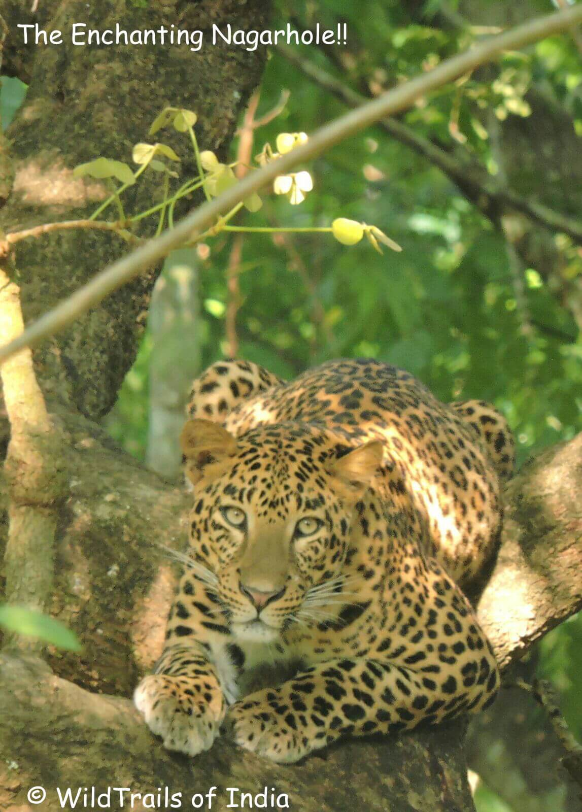 Nagarhole Wildtrails of india