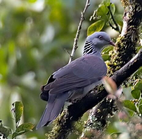 Pambadum Shola National Park wildtrails of india