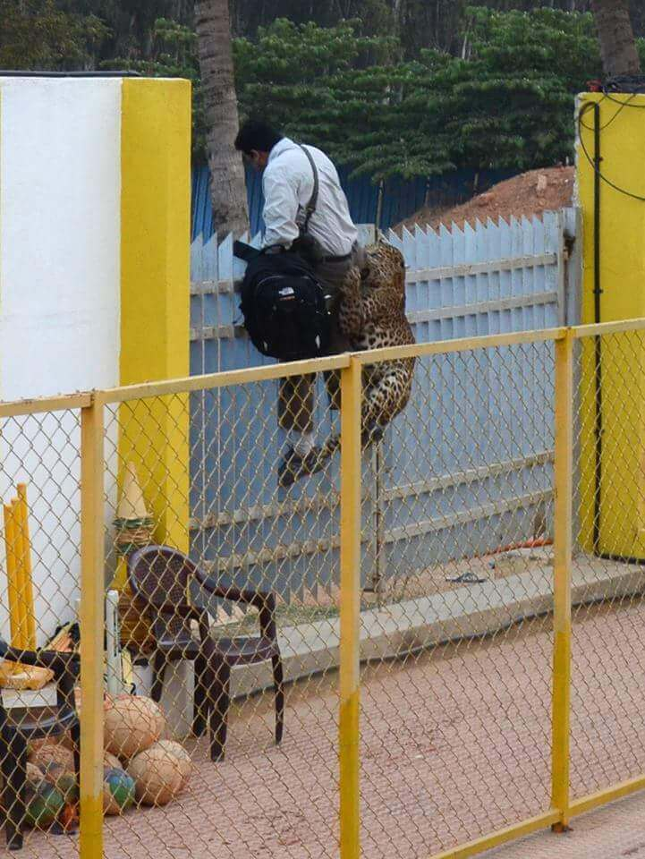 Leopard attack Bangalore School Vibgyor