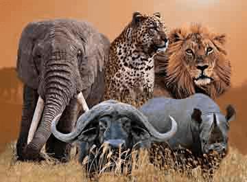 the big 5 of the south indian jungle safari. Black Bedroom Furniture Sets. Home Design Ideas
