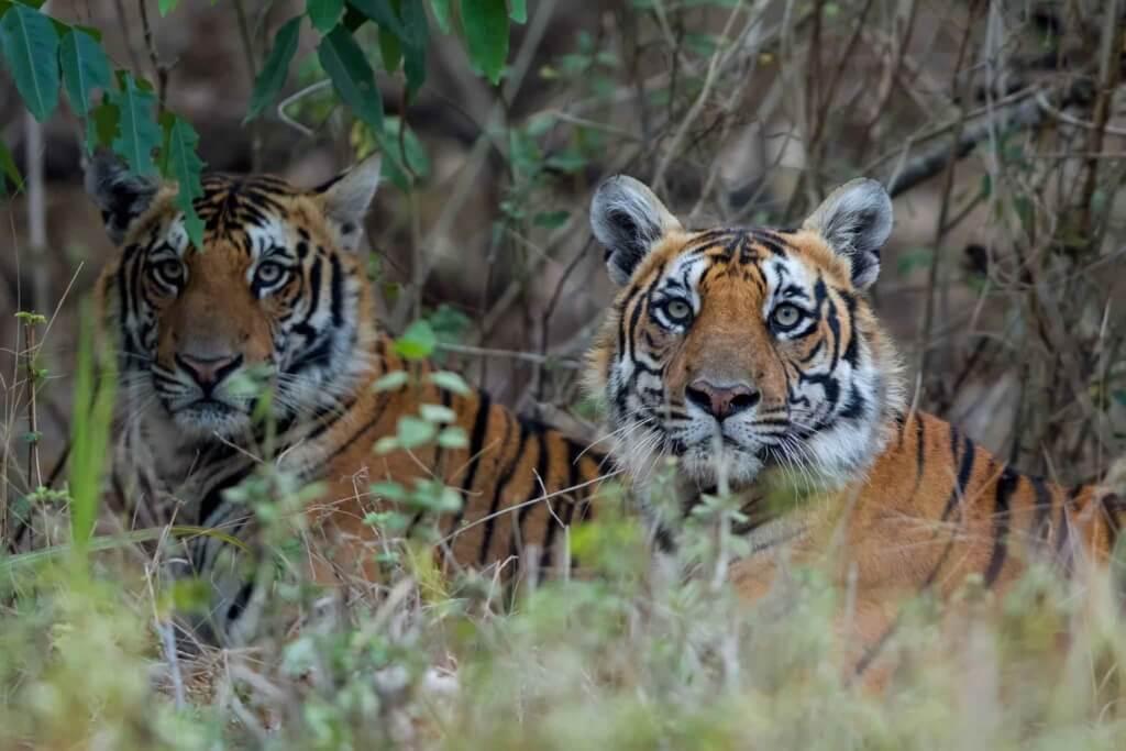 The Amazing Nagarhole Safari minus the Expensive Stay