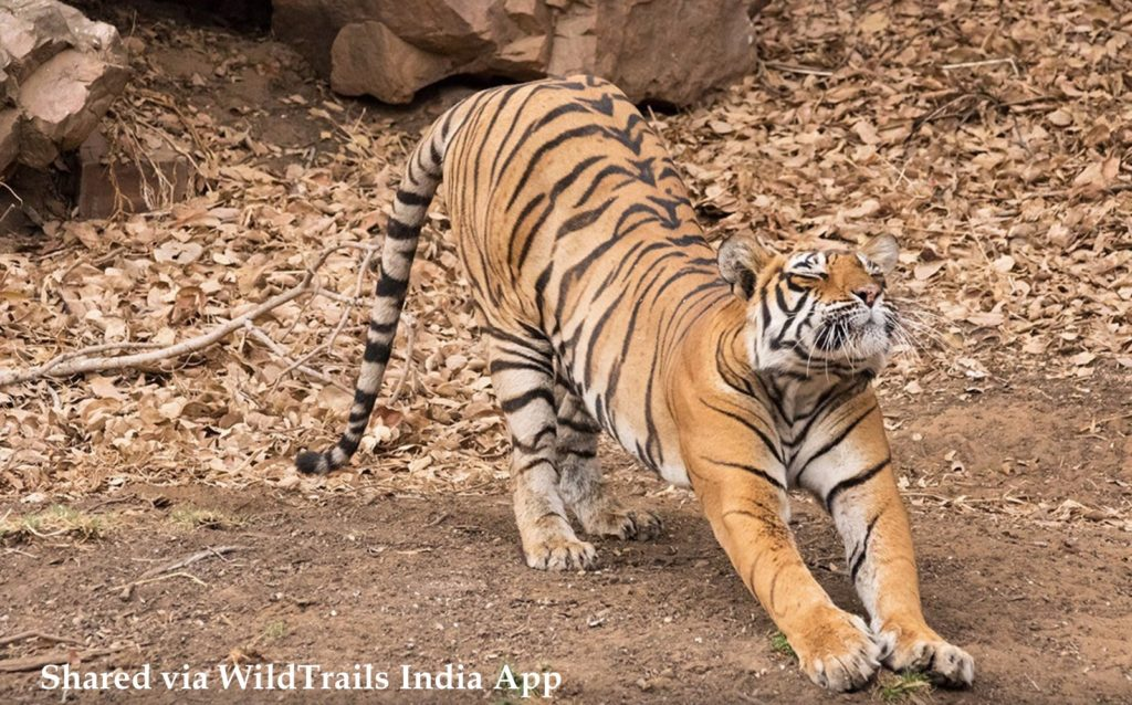 Tadoba Safari Tariff