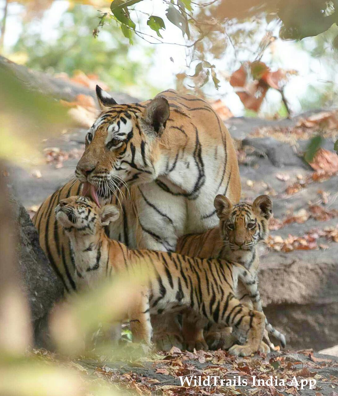 first time pench visitors