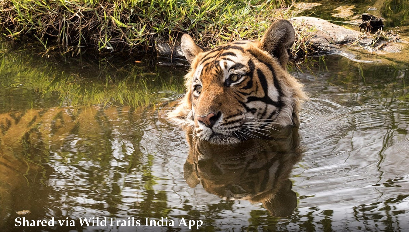 top5 india's tiger reserves