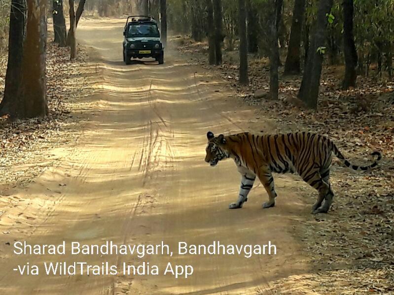 top 5 india's tiger reserves bandhavgarh