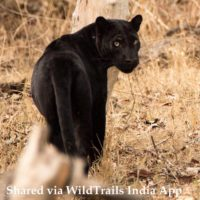 Safari at Kabini without a Stay