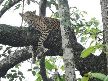 only safari at Kabini