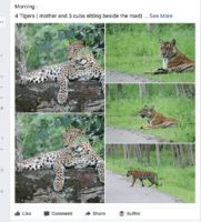 Can Facebook & WhatsApp images really track Tigers location?