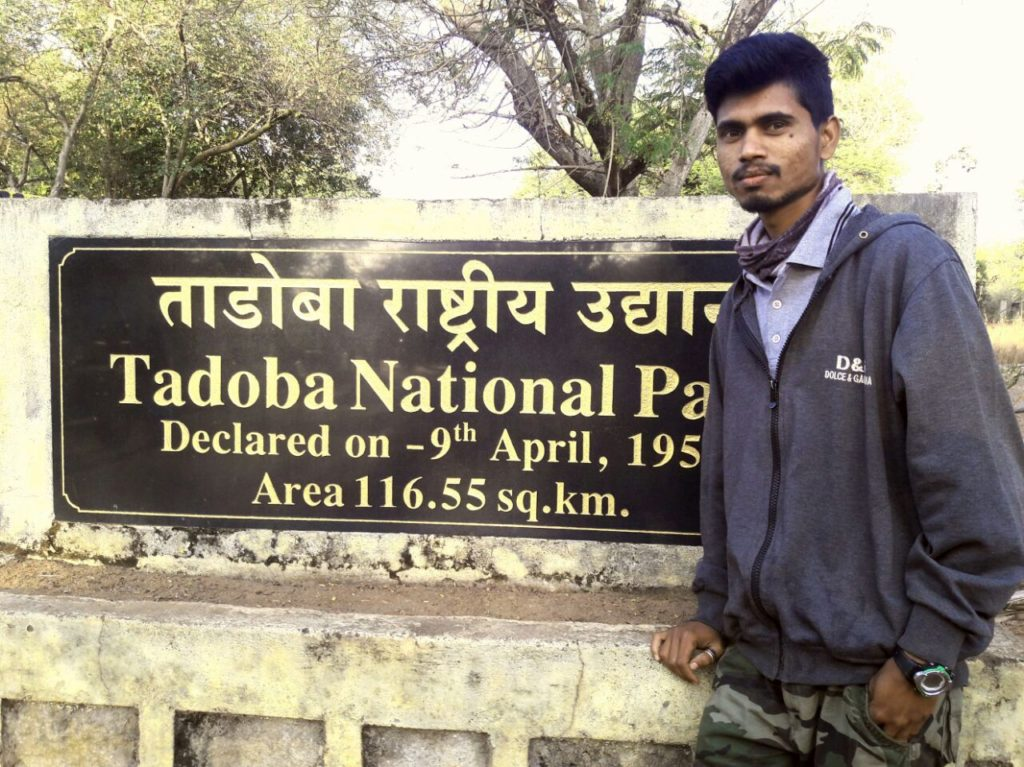 ratan tadoba guide wildtraiils india