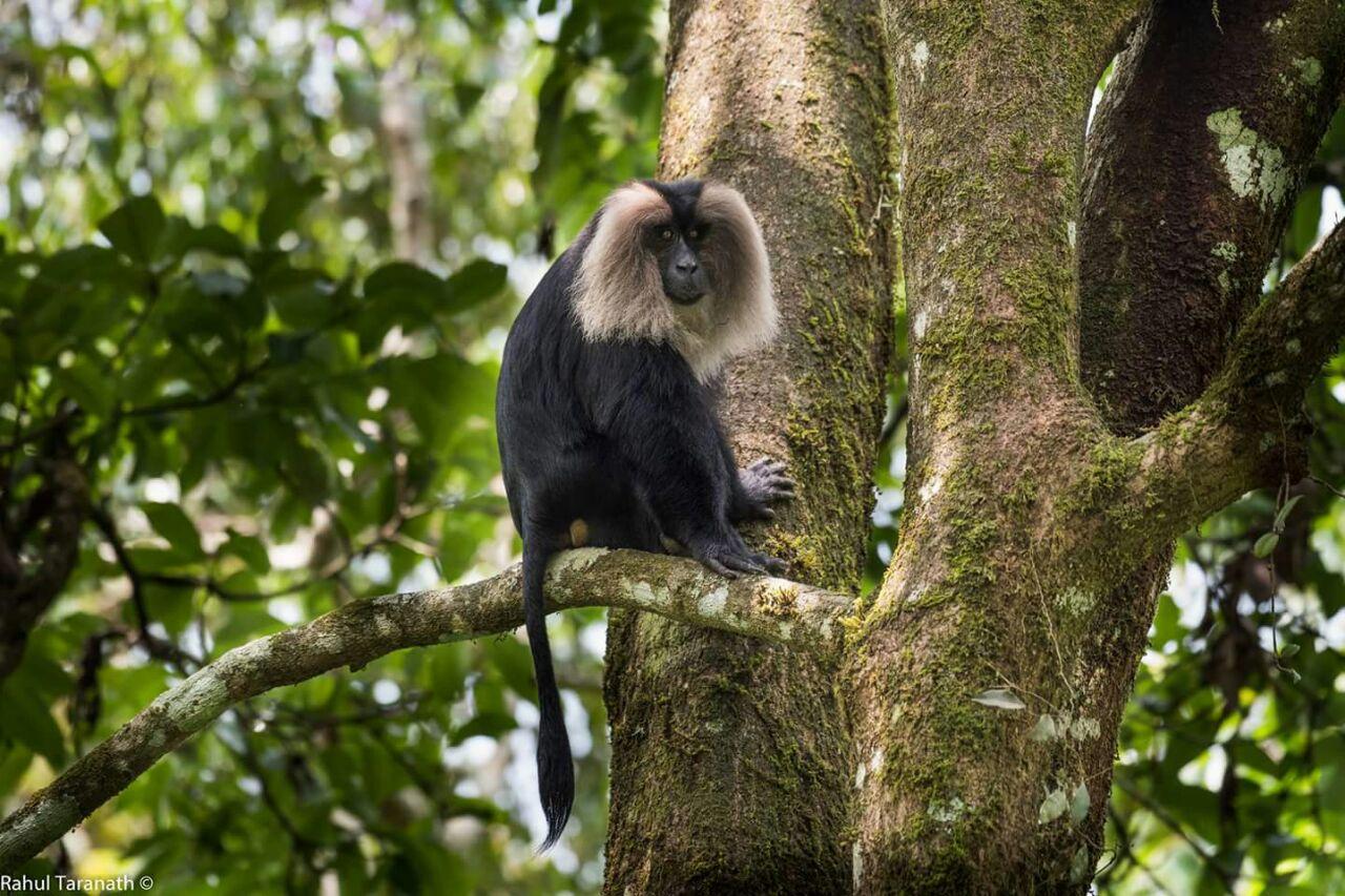 Valparai, hidden wildlife jewel of the south