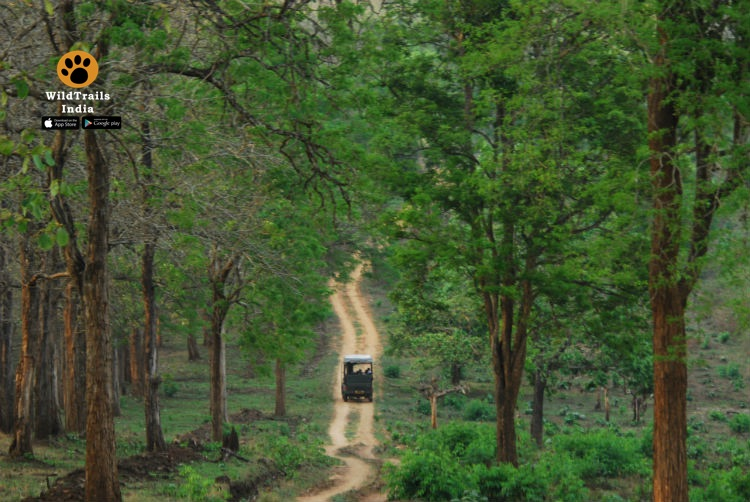 Complete List of All Wildlife Sanctuaries & National Parks of India