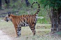 ranthambore Safari Zones