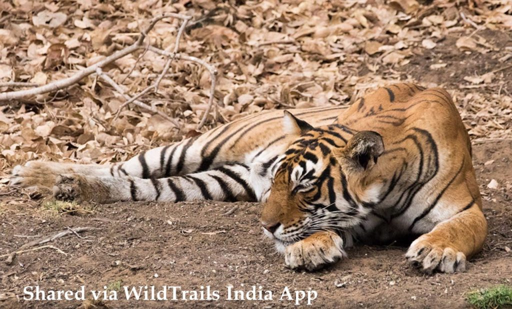 ranthambore safari booking