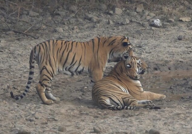 Ranthambore safari types and options