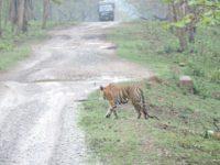 book online kabini safari