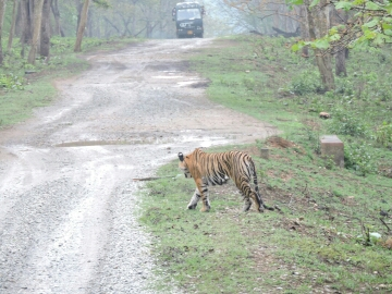 How to book online Kabini Safari? - from WildTrails