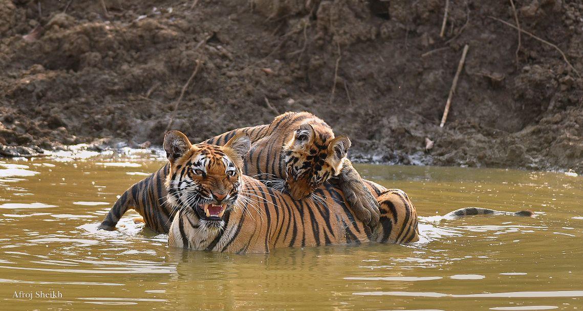 tourism activities Stress Tigers