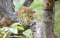 best Kabini Itinerary