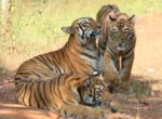All you want to know about Ranthambore