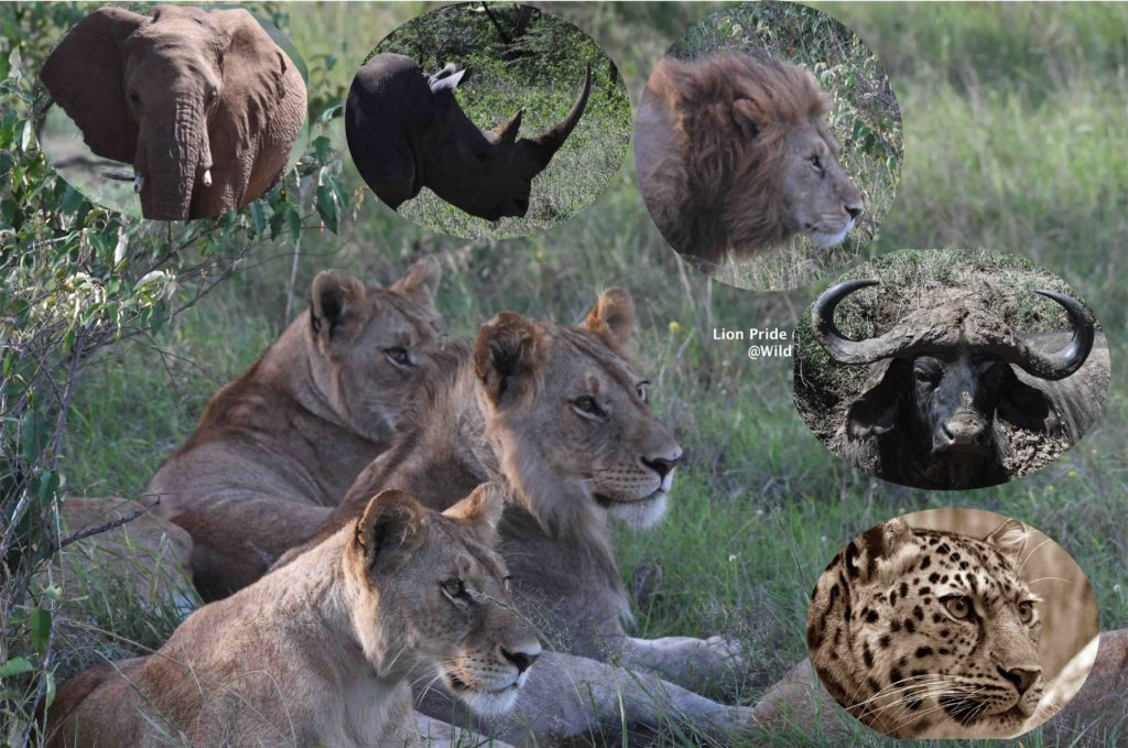 How to plan your Kenya Safari Trip Big 5 Kenya