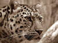 Kenya's Samburu Special 5
