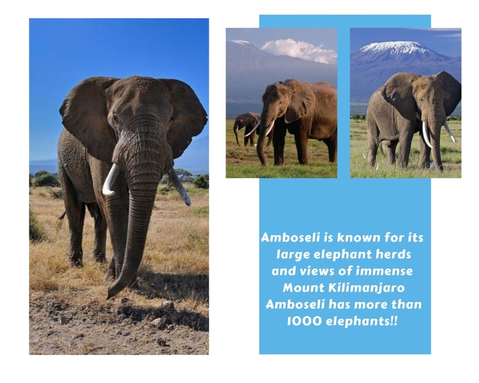 Amboseli (Wildtrails Recent Sightings)