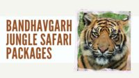 Bandhavgarh Jungle Safari Packages