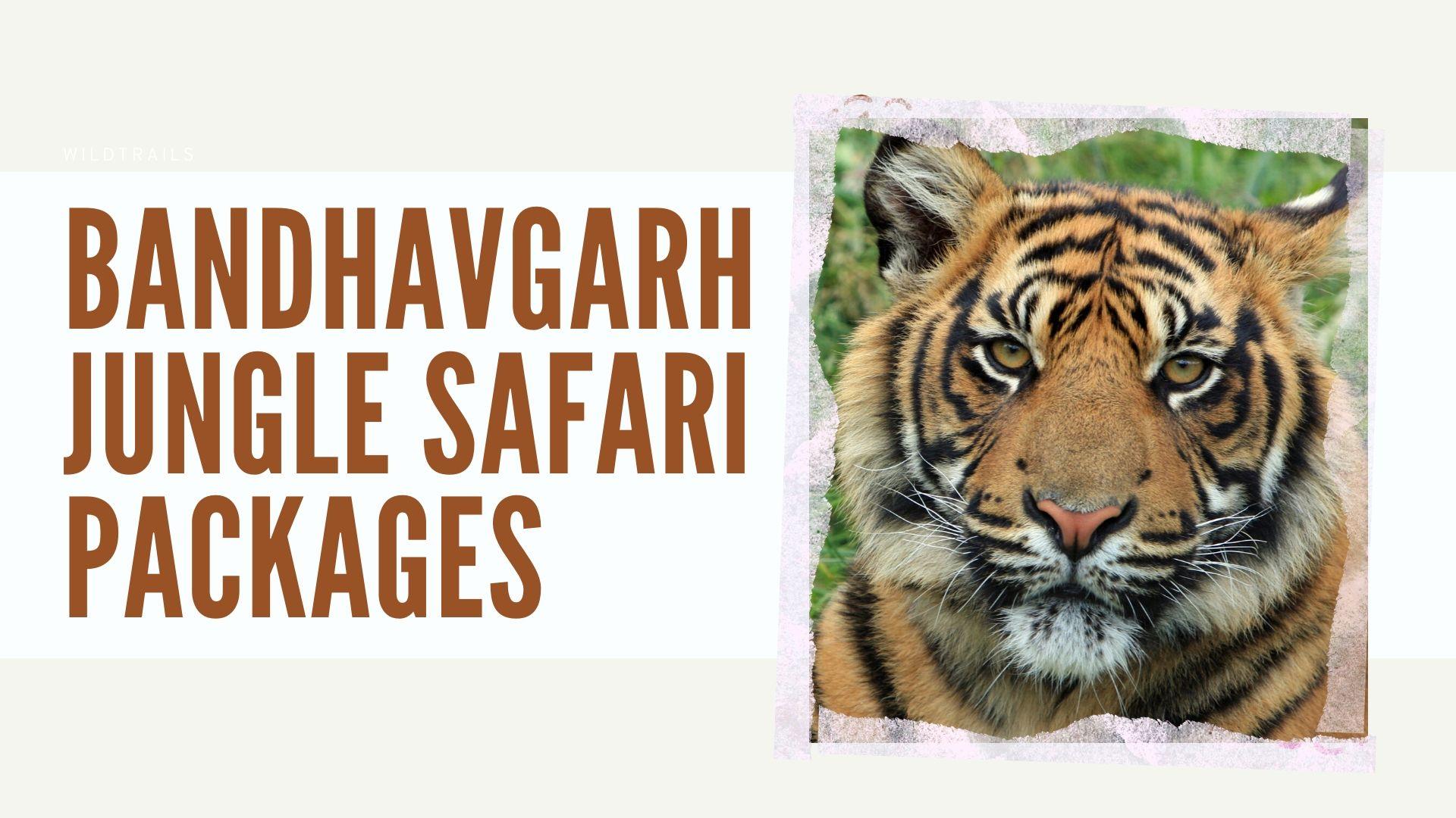 Bandhavgarh Jungle Safari Packages