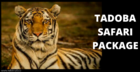 Tadoba Safari Package